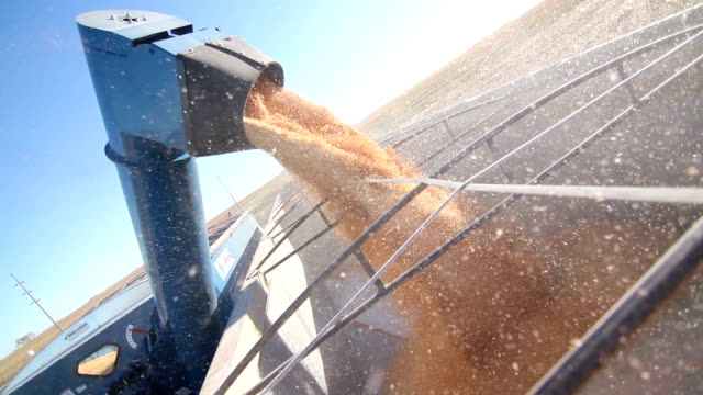 Close up of Combine Harvester Loading Corn Into Truck Trailer video