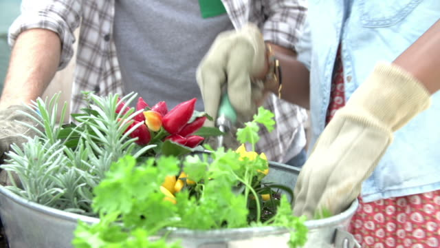 nahaufnahme von paar pflanzen garten auf dem dach zusammen - urban gardening stock-videos und b-roll-filmmaterial