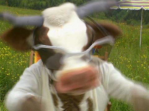 Close up of cow video