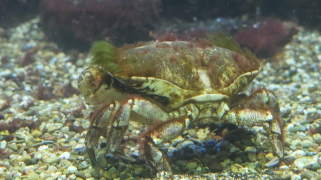 Close up of crab