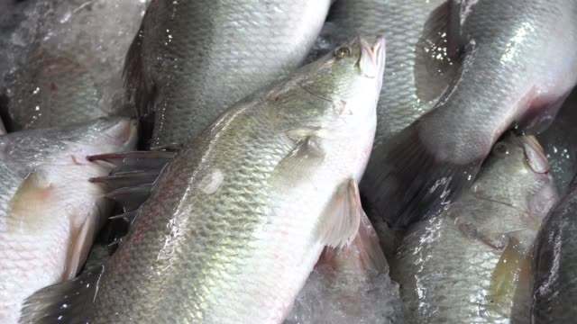 Close up of dead Giant Sea Perch fish on ice in stall at the market.