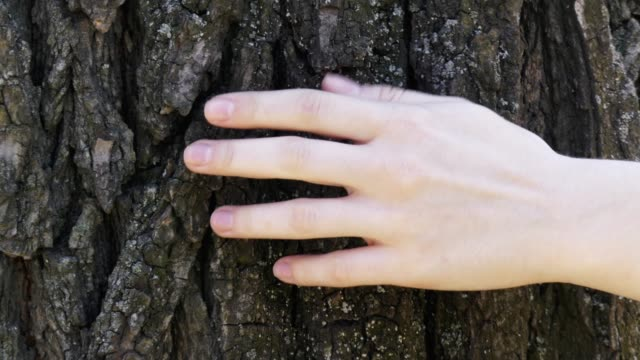Close up of female hand gently touching a tree trunk in sunny day. Concept of nature and forest protection, environment and ecology care.