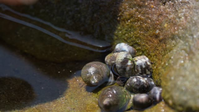 close up of finger touching snails in tide pool water