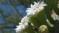 istock Close Up of Flowers on a Saguaro Cactus in Arizona 1227182023