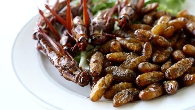 nahaufnahme von fried insekten in schale. proteinreiche nahrung - grashüpfer stock-videos und b-roll-filmmaterial