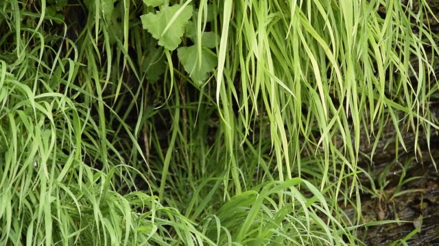 close up of green grass background, lush vegetation wall - cespuglio tropicale video stock e b–roll