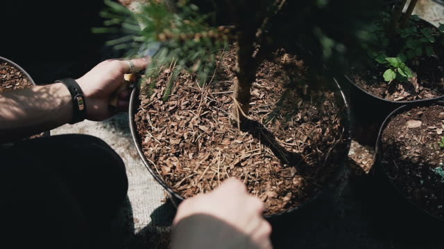 Close up of hands. People plant seedlings in black soil using garden tools in garden center