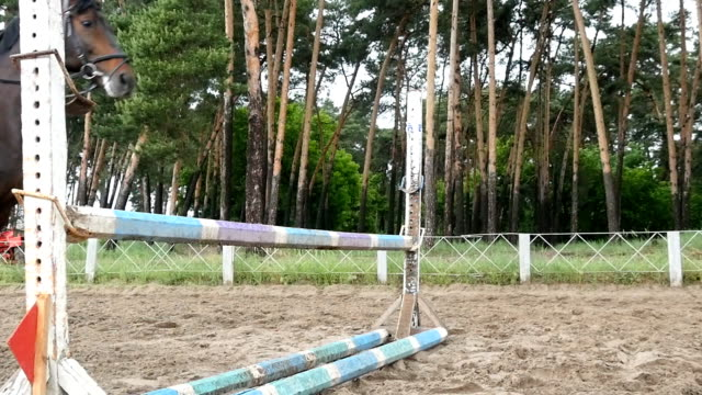Close up of horse feet. Horse runs on the sand and jumps through a barrier. Slow motion Close up of horse feet. Horse runs on the sand and jumps through a barrier. Slow motion paddock stock videos & royalty-free footage