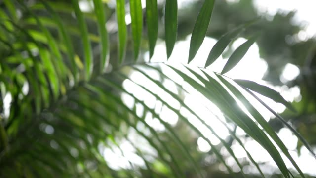 close up of jungle fern or palm frond in afternoon light - cespuglio tropicale video stock e b–roll