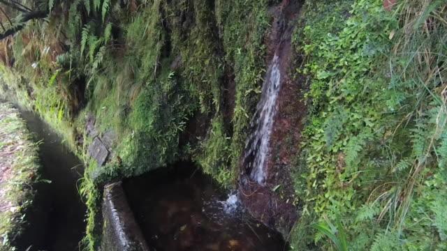 vídeos de stock e filmes b-roll de close up of laurel forest on madeira. tourist trail levada fontaines 25 (twenty-five fountains). - ilha da madeira