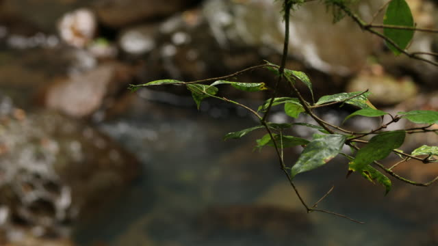 Close Up Of Leaves And Rainforest Stream In Australian Rainforest