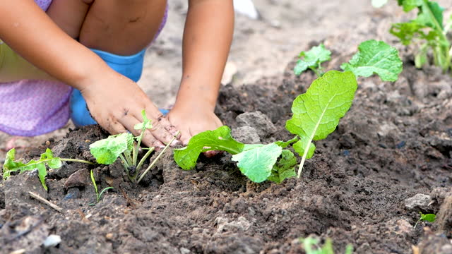Close up of little girl hands was carrying of small plant to planting into the soil. Save The World and Ecology concept. Close up of little girl hands was carrying of small plant to planting into the soil. Save The World and Ecology concept. earth day stock videos & royalty-free footage