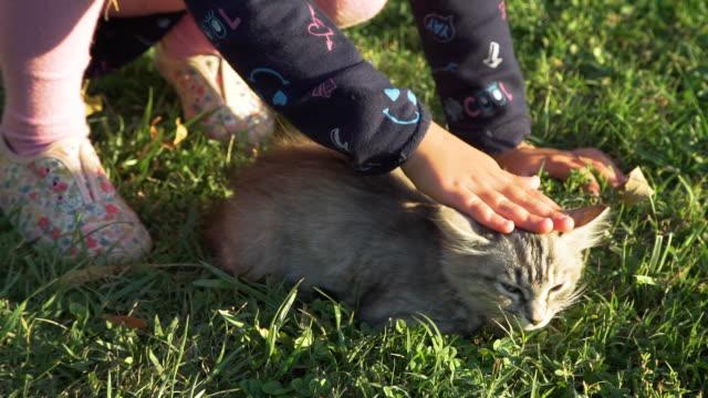 Close Up of Little Girl Petting Kitten at Sunset