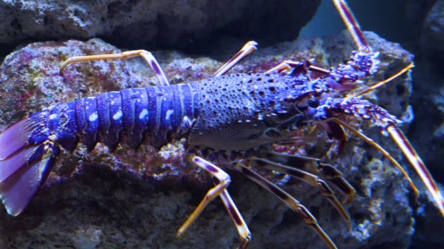 Close up of  lobster