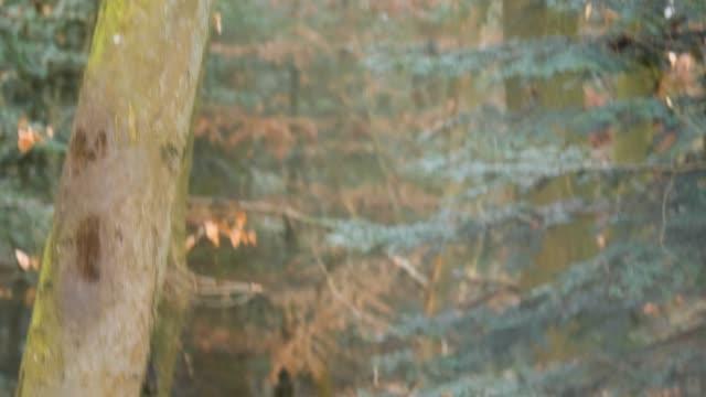 sonbaharda vaşak kedi yakın çekim - etçiller stok videoları ve detay görüntü çekimi