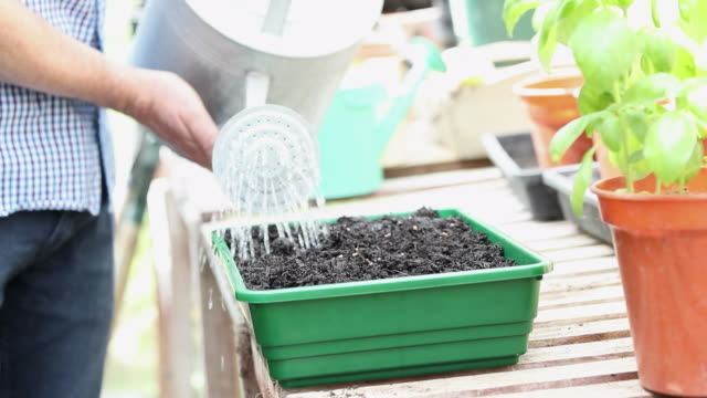 Close Up Of Man In Greehouse Watering Seeds In Tray With Watering Can Close Up Of Man In Greehouse Watering Seeds In Tray With Watering Can watering stock videos & royalty-free footage