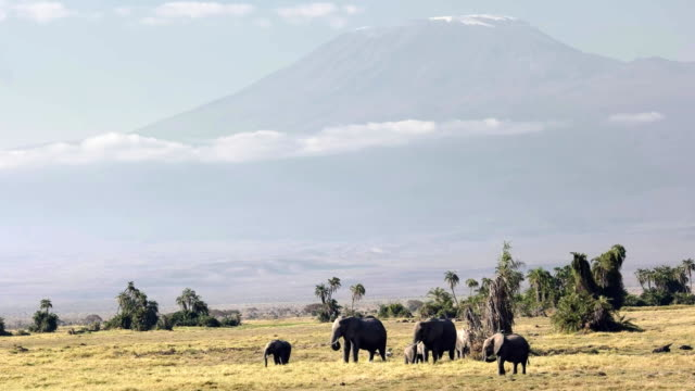 close up of mt kilimanjaro with a herd of elephants at amboseli
