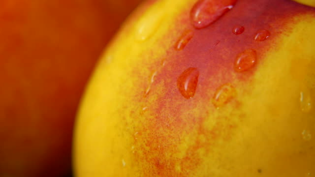 close up of nectarine surface with a drop of water slowly flowing down - pesca frutta video stock e b–roll