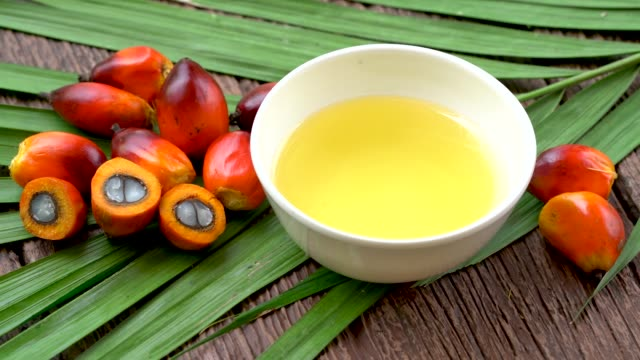 vídeos de stock e filmes b-roll de close up of  oil palm fruits and cooking palm oil with palm leaf on the white background. - palm oil bottles