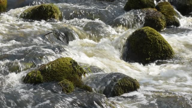 close up of river stream flowing down over stones - lituania video stock e b–roll