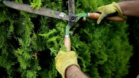 vídeos y material grabado en eventos de stock de cierre de tijera y hombre que poda un árbol - cortar