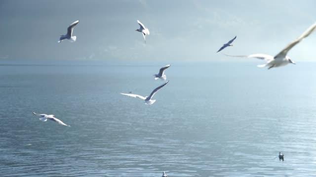 靠近有山的湖附近的海鷗 - 海鷗 個影片檔及 b 捲影像