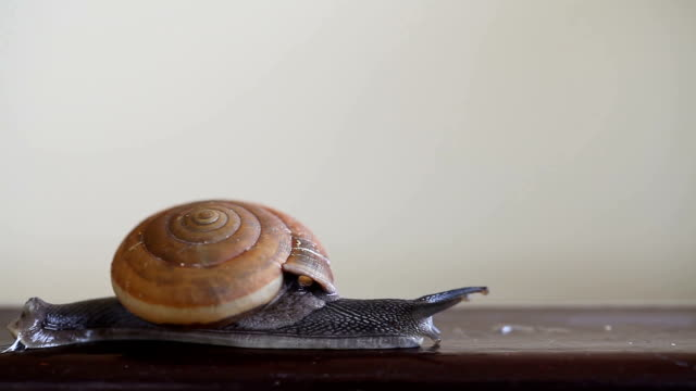 Close up of snail video
