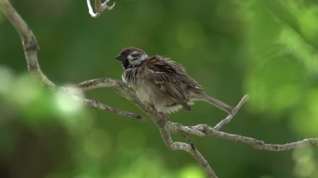 Close up of  sparrow perching on branch.