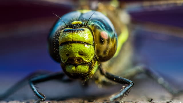 Close up of the compound eye from dragonfly