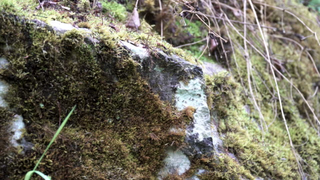 Close up of the ground and a stone in the forest covered by green moss. Stock footage. Summer grove with withered wet leaves lying on the ground
