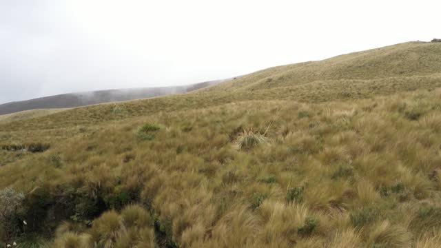Close up of the high grass typically present at high altitudes while flying over a hilly landscape with fog in the background in the andean mountains