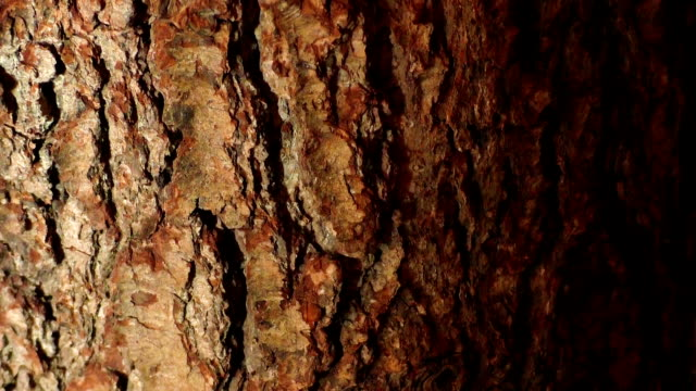 Close up of tree bark Close up of tree bark plant bark stock videos & royalty-free footage