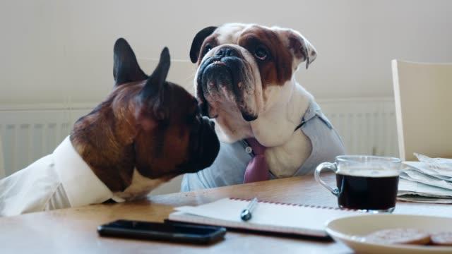 nahaufnahme von zwei hunde auf einer tagung im business meeting room - konferenztisch stock-videos und b-roll-filmmaterial