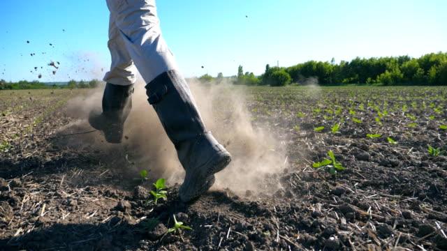 フィールド上の小さな緑の芽をジョギング、晴れた日に乾いた地面を蹴るブーツの認識できない男性農家のクローズ アップ。 - 靴点の映像素材/bロール