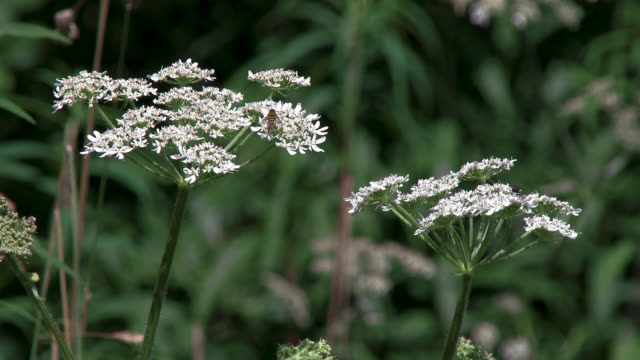 närbild av vilda blommor - vild blomma bildbanksvideor och videomaterial från bakom kulisserna