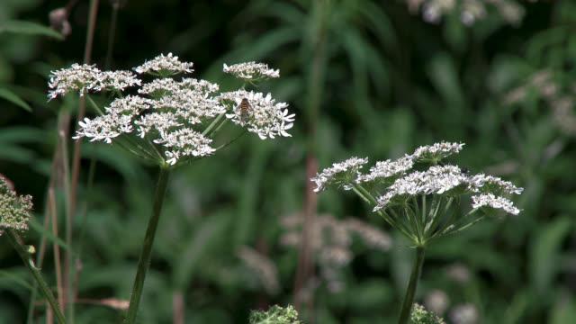 vídeos de stock e filmes b-roll de close up of wild flowers - granadilha