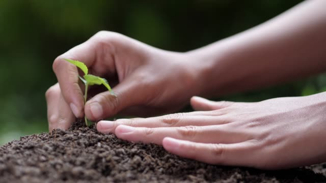 Close up of woman hands planting seeds, gardening on earth day slow motion green bokeh background Close up of woman hands planting seeds, gardening on earth day slow motion green bokeh background earth day stock videos & royalty-free footage