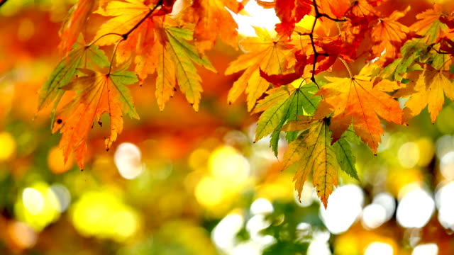 close up of yellow leaves in forest video