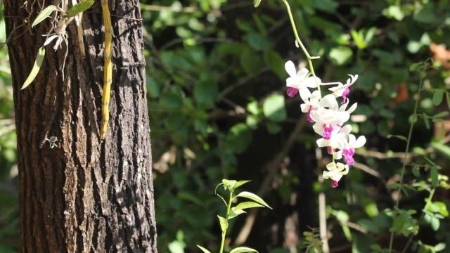 Close-up van gele mix donker roze orchideeën bloem video
