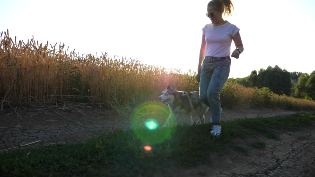 Close up of young girl walking with her siberian husky along road near wheat field at sunset. Happy woman playing with her domestic animal along path near meadow at summer. Slow motion Close up of young girl walking with her siberian husky along road near wheat field at sunset. Happy woman playing with her domestic animal along path near meadow at summer. Slow motion leash stock videos & royalty-free footage