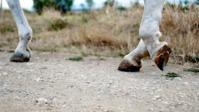 Close up on a horse walking video