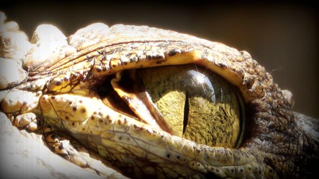 Close up on eye Crocodile.