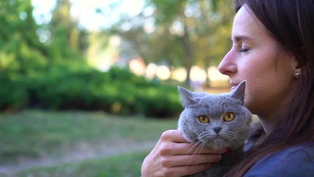vídeos y material grabado en eventos de stock de retrato de cerca de un gato recto de las tierras altas escocesas con el propietario. - vibrisas