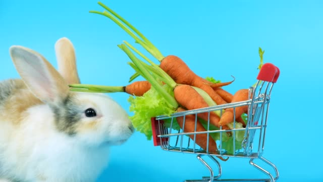 Close up rabbit eat lettuce and carrot in shopping cart.