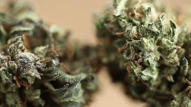 närbild rekreation marijuana medicinsk cannabis olja cbd - thc bildbanksvideor och videomaterial från bakom kulisserna