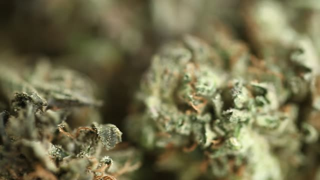 close up recreation marijuana medical cannabis oil cbd video