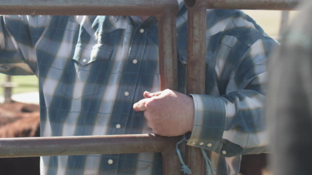Close up senior rancher hands to face as he gives instructions Close up senior rancher hands to face as he gives instructions rancher stock videos & royalty-free footage