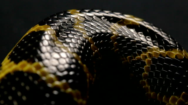 Close up shooting of snakeskin video