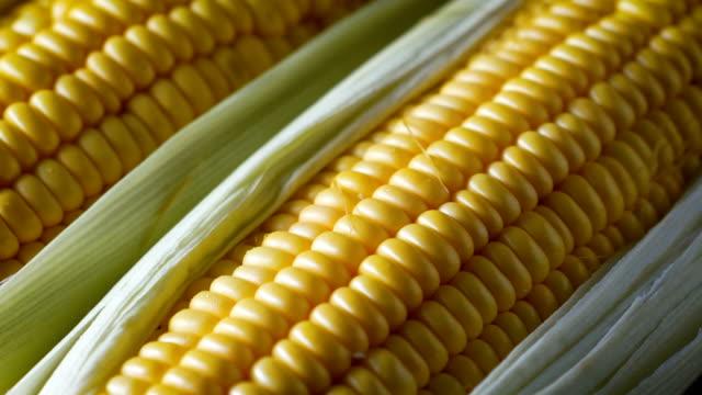 närbild sköt färsk söt majs, med naturligt solljus, hög vitaminfrukt och grönsaker - skalhylsa bildbanksvideor och videomaterial från bakom kulisserna