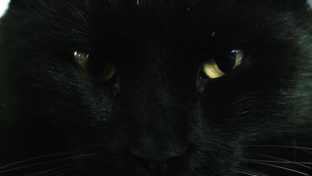 HD: Close Up Shot Of A Black Cat video